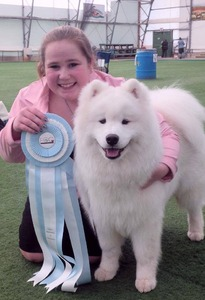 Can Ch CFC BPIS Snowstar's Autumn Equinox (Bear)