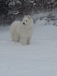 Snowstar's A Christmas Carol (Apollo)