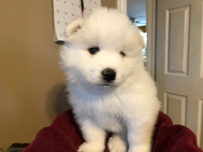 Snowstar's Furry Buddy
