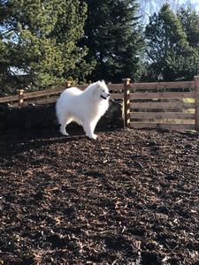 Snowstar's Plowing Thru (Mac)