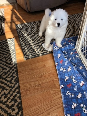 Snowstar's Canadian Rocky (Jasper)