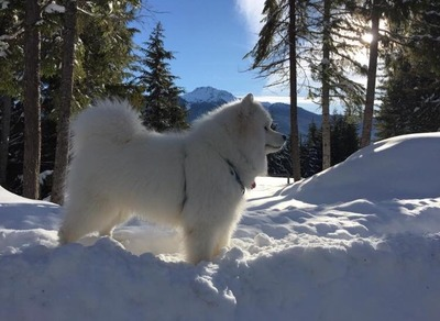 Snowstar's Ace of Hearts (Cash)