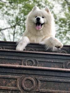 Snowstar's Furry Friend (Ghost)