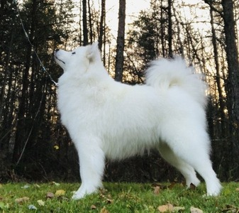 BBPIS Snowstar's Finley's Favourite (Elsa)