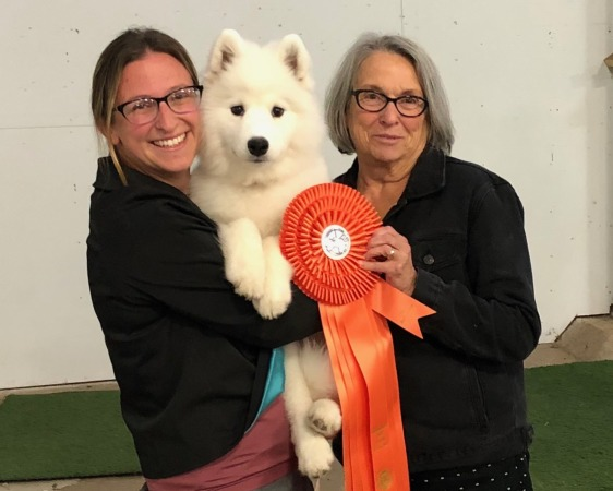 Elsa taking Best Baby Puppy in Show  Oct/2018
