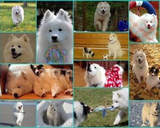 Chimo's Collage